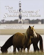 Wild Horses of Shackleford Banks North Carolina